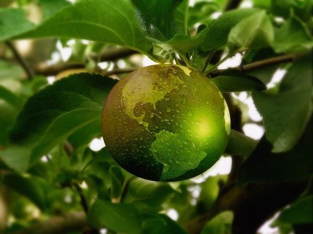 地球の模様の果実